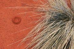 Röd jord och inföding Spinifex, Uluru fotografering för bildbyråer