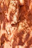 Röd jordbakgrund på Seychellerna Arkivbild