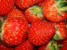 Röd jordgubbe i dragen tillbaka Arkivbild