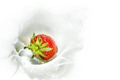 Röd jordgubbe som faller in i den mjölkaktiga färgstänket royaltyfri fotografi