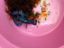 Röd jordluckrarekrävafisk royaltyfri bild