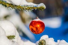 Röd jul klumpa ihop sig på ett granträd om den snöig skogen Royaltyfria Bilder