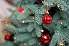 Röd julleksak som hänger på en filial på en festlig jultre Royaltyfri Fotografi