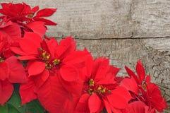Röd julstjärna på träbakgrund arkivbild