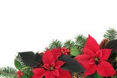 Röd julstjärnablommagräns Arkivbild
