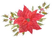 Röd julstjärnablommaordning Royaltyfria Bilder