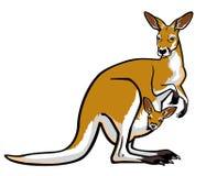 Röd känguru med känguruunge i påse Royaltyfri Fotografi