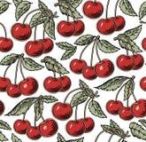 Röd körsbär som är mogen, isolerat träd Gravyr teckning freehand floror Realistisk illustration för tappningvektor seamless bakgr stock illustrationer