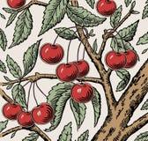 Röd körsbär som är mogen, isolerat träd Gravyr teckning freehand floror Realistisk illustration för tappningvektor seamless bakgr royaltyfri illustrationer