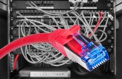 Röd kabel för nätverk STP-FTP med närbild för kontaktdon RJ-45 arkivbild