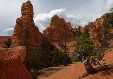 Röd kanjon, Utah, USA Arkivfoto
