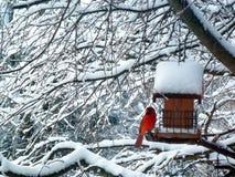 Röd kardinal Bird Snow Tree Royaltyfria Bilder