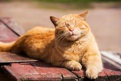 Röd katt Royaltyfria Foton