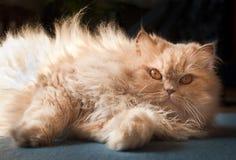 Röd katt Royaltyfria Bilder