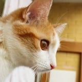 Röd katt Arkivbilder