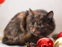Röd katt Royaltyfri Bild