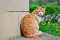 Röd katt för härlig gata royaltyfri bild