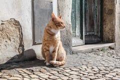 Röd katt I Arkivfoto