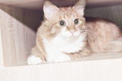 Röd katt i en ask Royaltyfri Fotografi