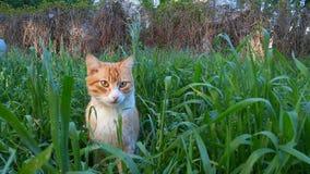 Röd katt i ett gräs Arkivfoton