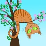 Röd katt i ett träd Fotografering för Bildbyråer