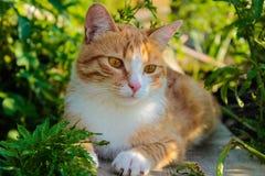 Röd katt i gräset royaltyfri foto