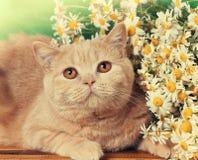 Röd katt med blommor Royaltyfri Fotografi