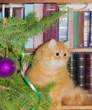 Röd katt nära julgranen Royaltyfria Foton