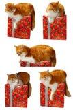 Röd katt- och gåvaask Arkivfoto