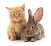 Röd katt och kanin Arkivbild