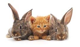 Röd katt och kaniner arkivfoto