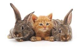 Röd katt och två kaniner arkivbilder