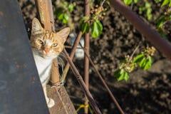 Röd katt på gatan royaltyfria bilder