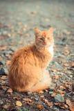 Röd katt på jordningen Fotografering för Bildbyråer