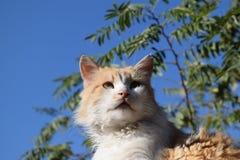 Röd katt på taket Fotografering för Bildbyråer