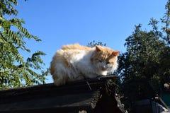 Röd katt på taket Arkivbilder