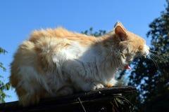 Röd katt på taket Royaltyfria Bilder