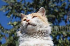 Röd katt på taket Arkivfoto