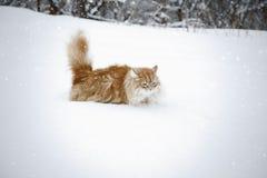 Röd katt som har gyckel i snön arkivbild