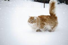 Röd katt som har gyckel i snön royaltyfri foto