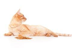Röd katt som ligger nära matningen Arkivfoton