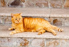 Röd katt som ligger på trappa Arkivbilder