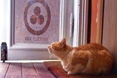 Röd katt som sitter under dörren royaltyfria foton