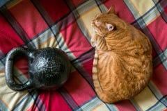 Röd katt som sover nära normaln 16 kg gjutjärnkettlebell Arkivfoto