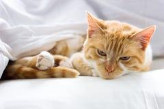 Röd katt som sover på en mjuk vit filt, närbild, hemtrevligt begrepp royaltyfria foton