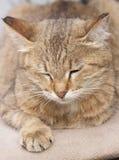 Röd katt som sover på ljus-sulad Arkivfoto
