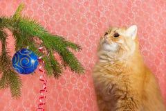 Röd katt under julgranen Arkivfoto