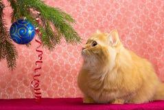 Röd katt under julgranen Royaltyfria Foton