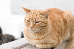 Röd katt utanför royaltyfri fotografi