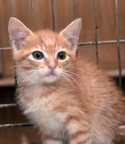 Röd kattunge i en bur royaltyfri bild